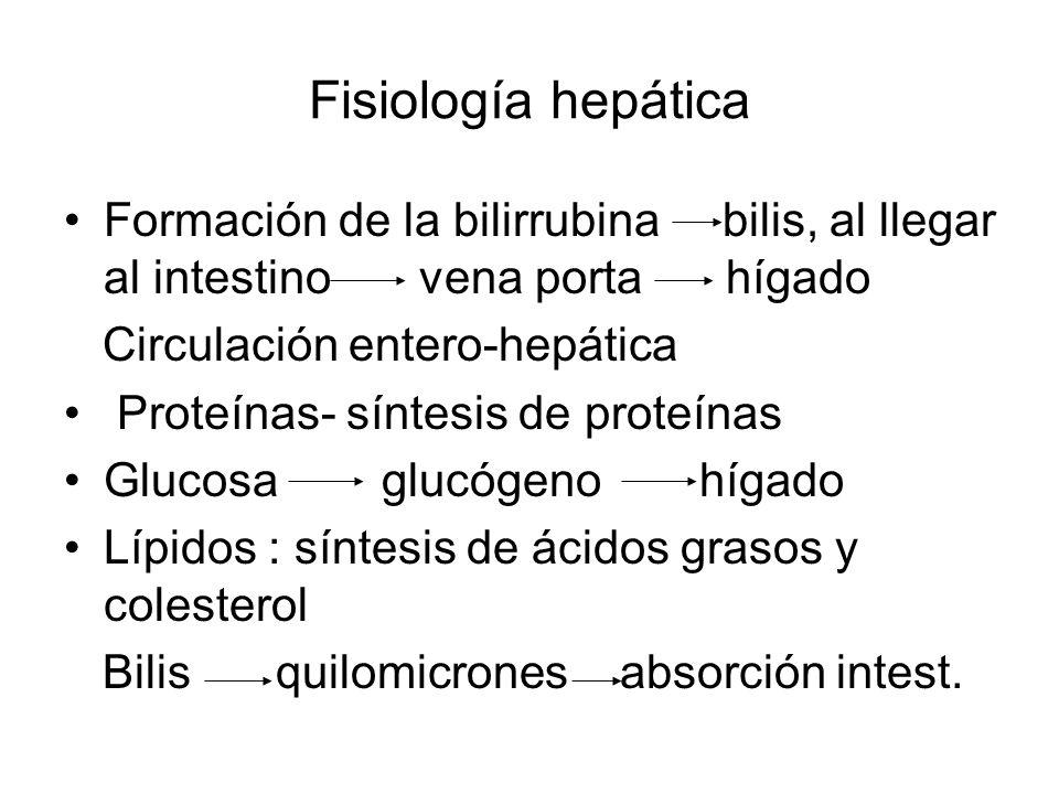 Fisiología hepática Formación de la bilirrubina bilis, al llegar al intestino vena porta hígado Circulación entero-hepática Proteínas- síntesis de pro