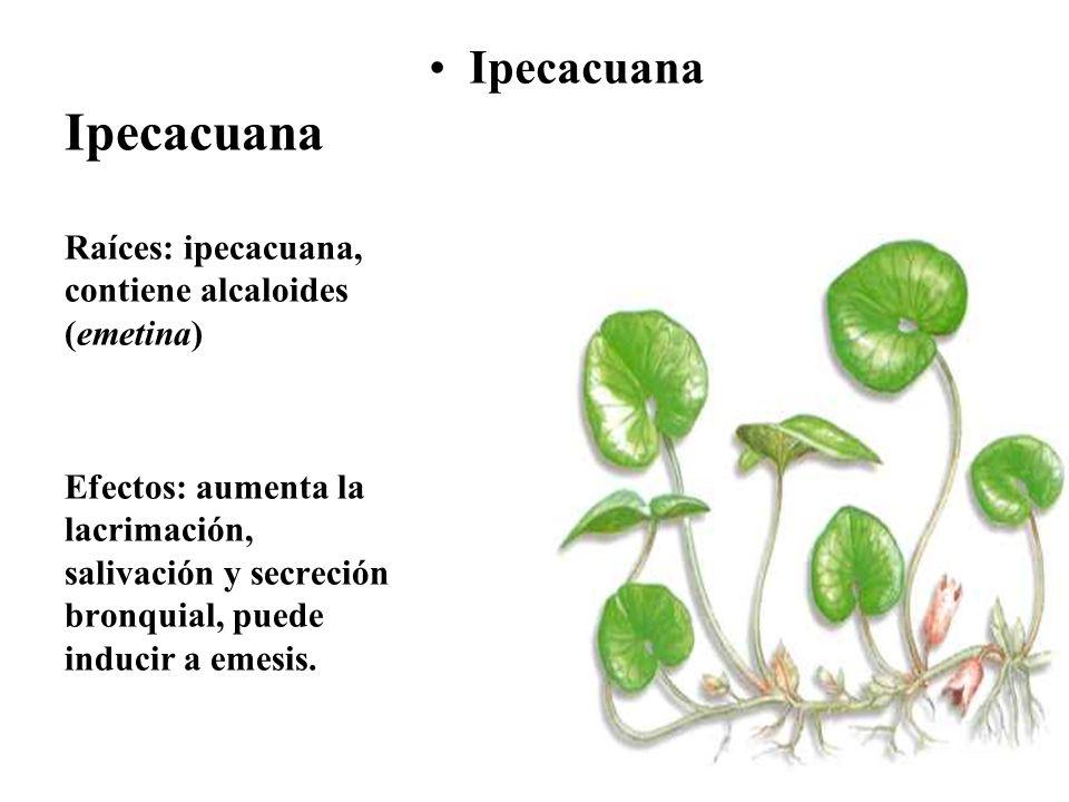Ipecacuana Raíces: ipecacuana, contiene alcaloides (emetina) Efectos: aumenta la lacrimación, salivación y secreción bronquial, puede inducir a emesis