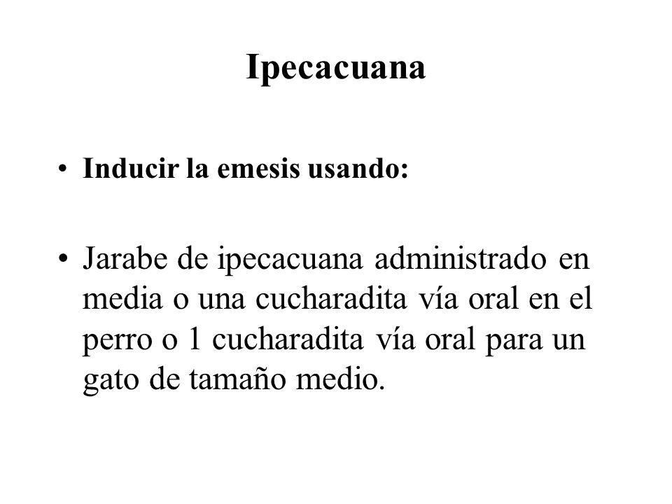 Ipecacuana Inducir la emesis usando: Jarabe de ipecacuana administrado en media o una cucharadita vía oral en el perro o 1 cucharadita vía oral para u