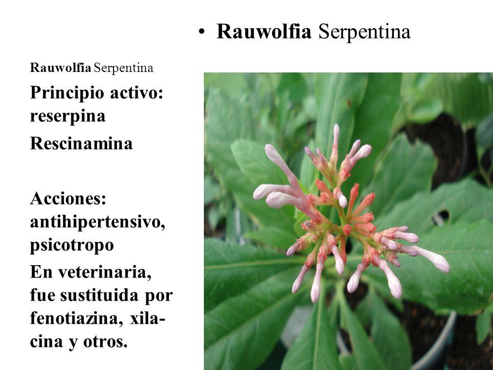 Rauwolfia Serpentina Principio activo: reserpina Rescinamina Acciones: antihipertensivo, psicotropo En veterinaria, fue sustituida por fenotiazina, xi
