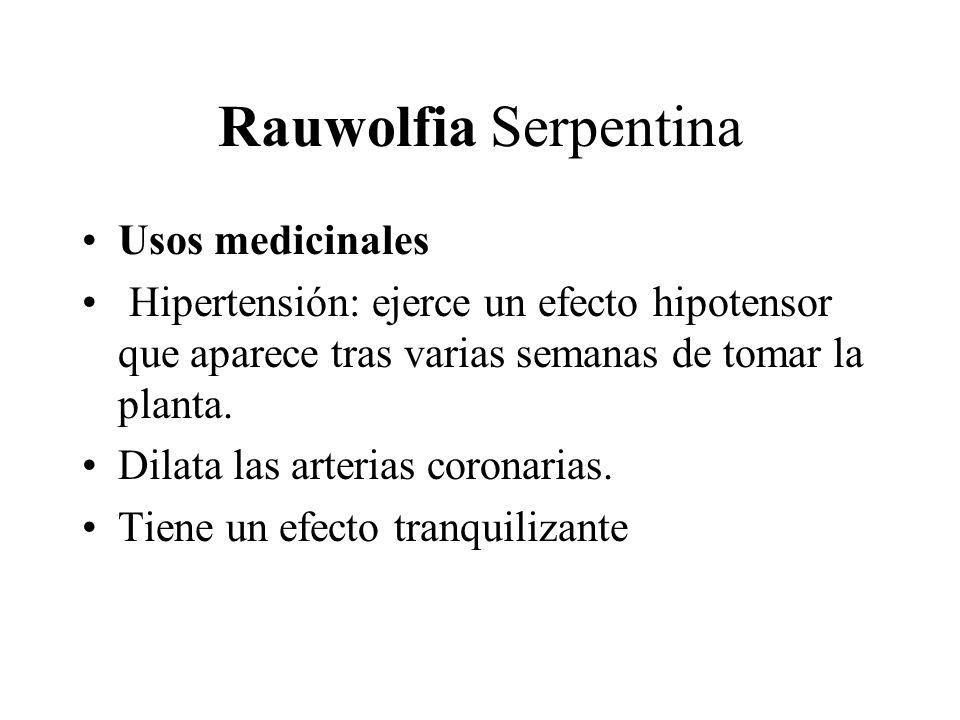 Rauwolfia Serpentina Usos medicinales Hipertensión: ejerce un efecto hipotensor que aparece tras varias semanas de tomar la planta. Dilata las arteria
