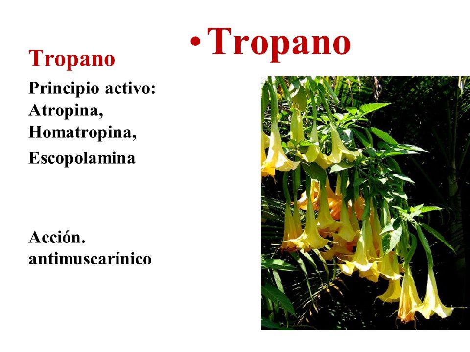 Tropano Principio activo: Atropina, Homatropina, Escopolamina Acción. antimuscarínico