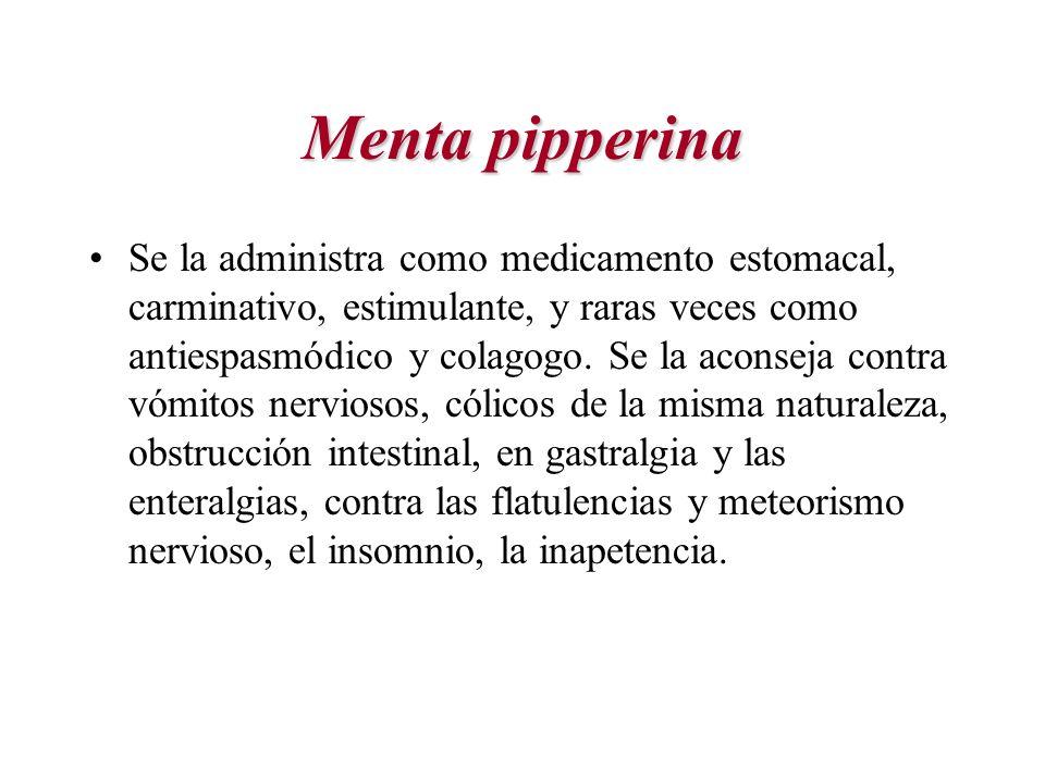 Menta pipperina Se la administra como medicamento estomacal, carminativo, estimulante, y raras veces como antiespasmódico y colagogo. Se la aconseja c