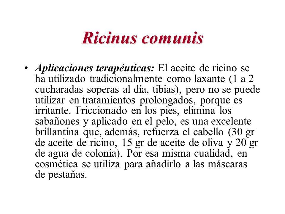 Ricinus comunis Aplicaciones terapéuticas: El aceite de ricino se ha utilizado tradicionalmente como laxante (1 a 2 cucharadas soperas al día, tibias)