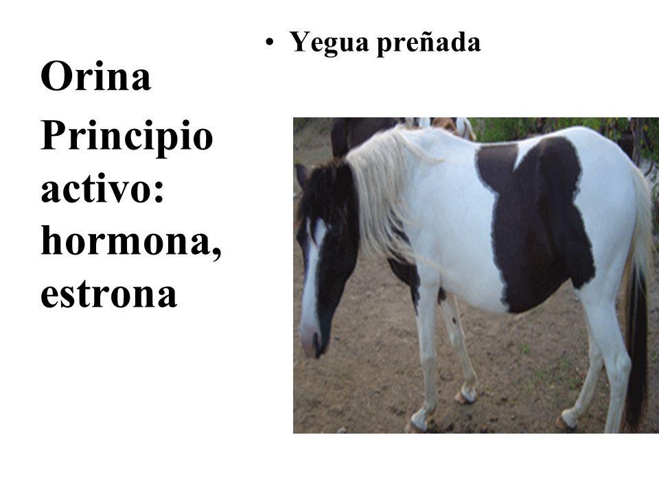 Orina Yegua preñada Principio activo: hormona, estrona
