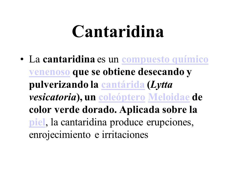 Cantaridina La cantaridina es un compuesto químico venenoso que se obtiene desecando y pulverizando la cantárida (Lytta vesicatoria), un coleóptero Me