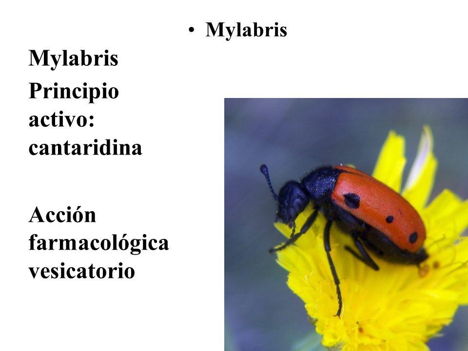 Mylabris Principio activo: cantaridina Acción farmacológica vesicatorio