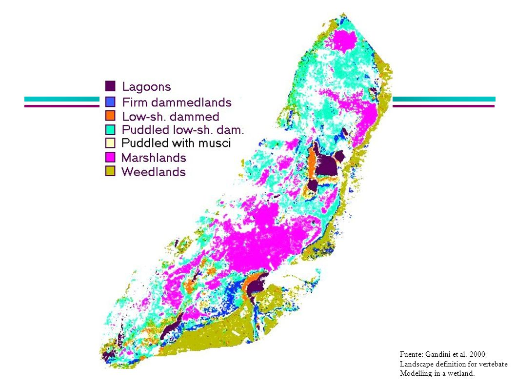 Fuente: Gandini et al. 2000 Landscape definition for vertebate Modelling in a wetland.