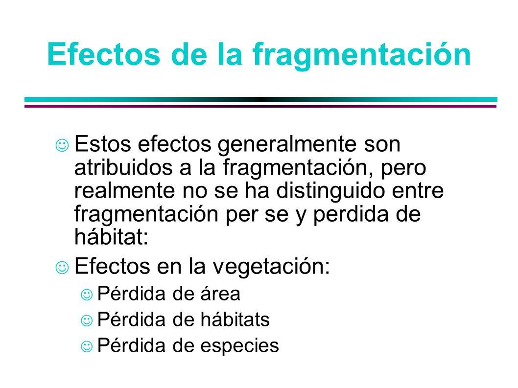Efectos de la fragmentación Estos efectos generalmente son atribuidos a la fragmentación, pero realmente no se ha distinguido entre fragmentación per
