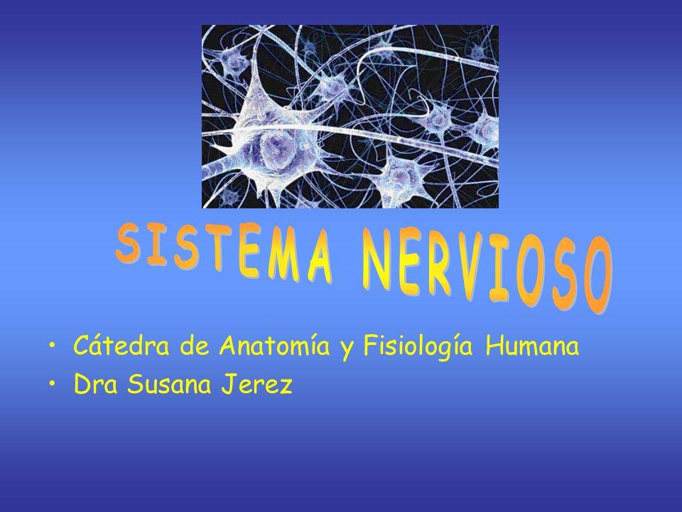 Cátedra de Anatomía y Fisiología Humana Dra Susana Jerez