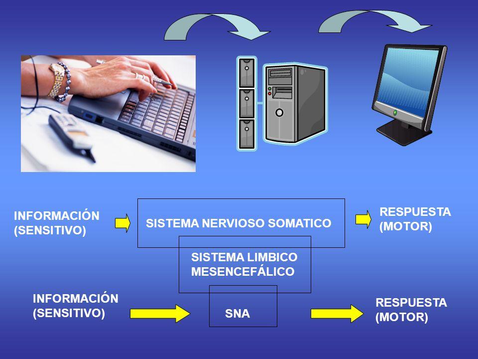 SISTEMA NERVIOSO SOMATICO INFORMACIÓN (SENSITIVO) RESPUESTA (MOTOR) SISTEMA LIMBICO MESENCEFÁLICO SNA INFORMACIÓN (SENSITIVO) RESPUESTA (MOTOR)