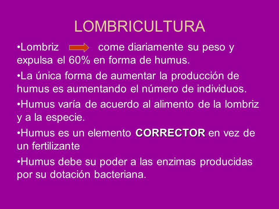 LOMBRICULTURA Lombriz come diariamente su peso y expulsa el 60% en forma de humus. La única forma de aumentar la producción de humus es aumentando el