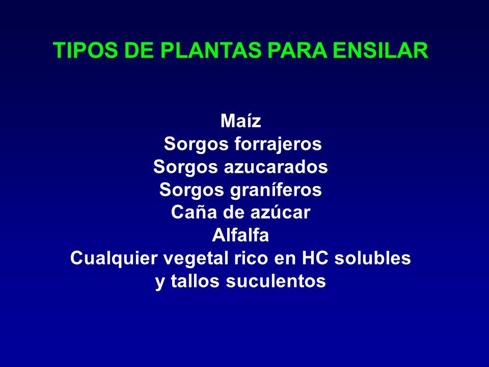 TIPOS DE PLANTAS PARA ENSILAR Maíz Sorgos forrajeros Sorgos azucarados Sorgos graníferos Caña de azúcar Alfalfa Cualquier vegetal rico en HC solubles