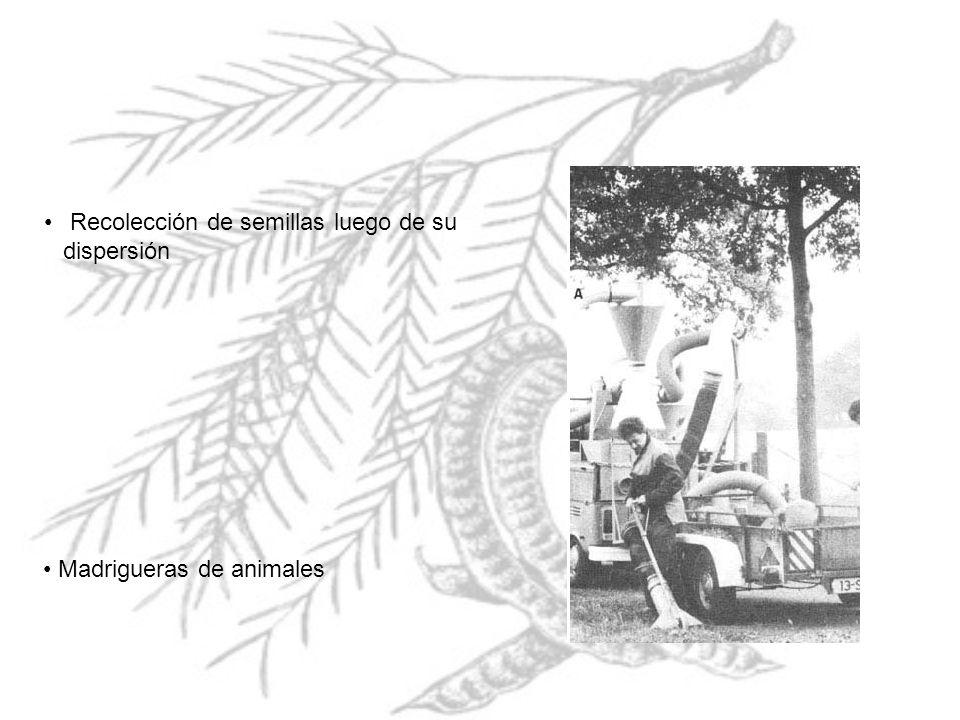 Recolección de semillas luego de su dispersión Madrigueras de animales