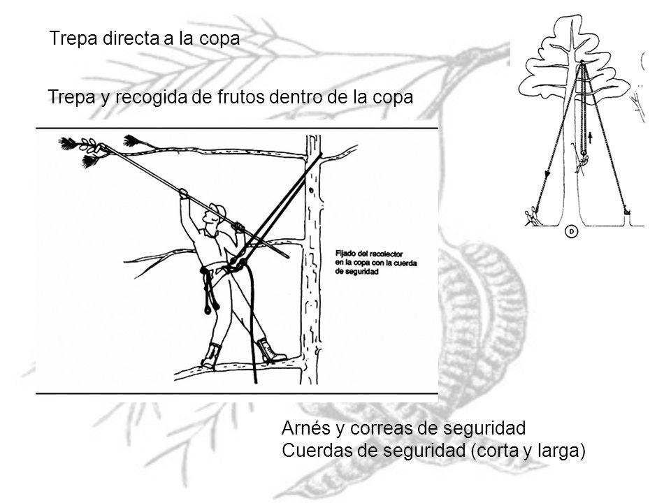 Trepa directa a la copa Trepa y recogida de frutos dentro de la copa Arnés y correas de seguridad Cuerdas de seguridad (corta y larga)