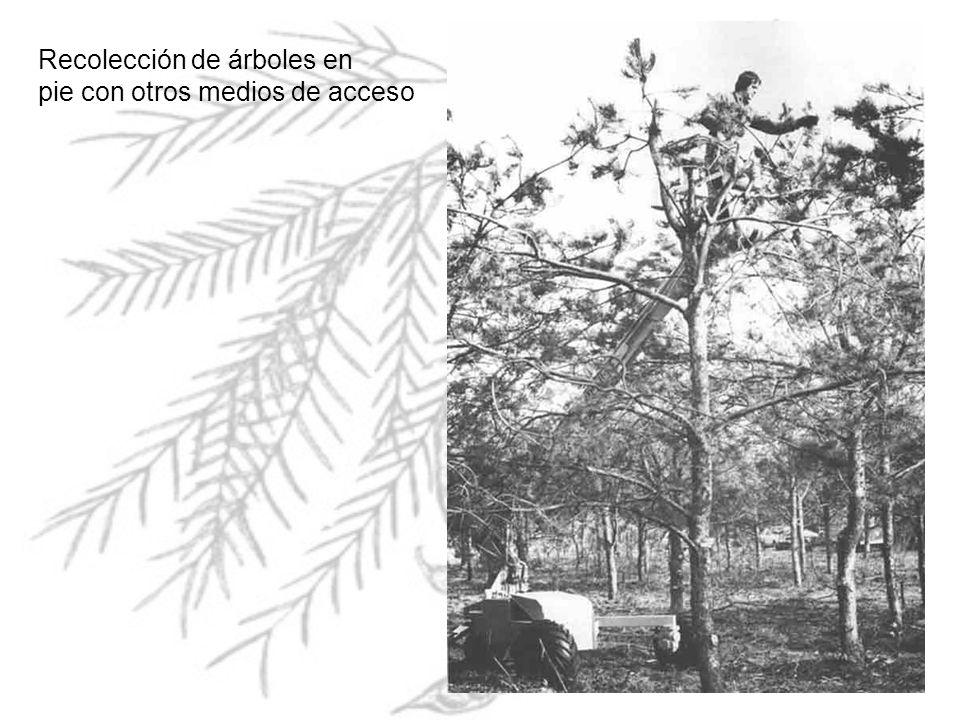 Recolección de árboles en pie con otros medios de acceso