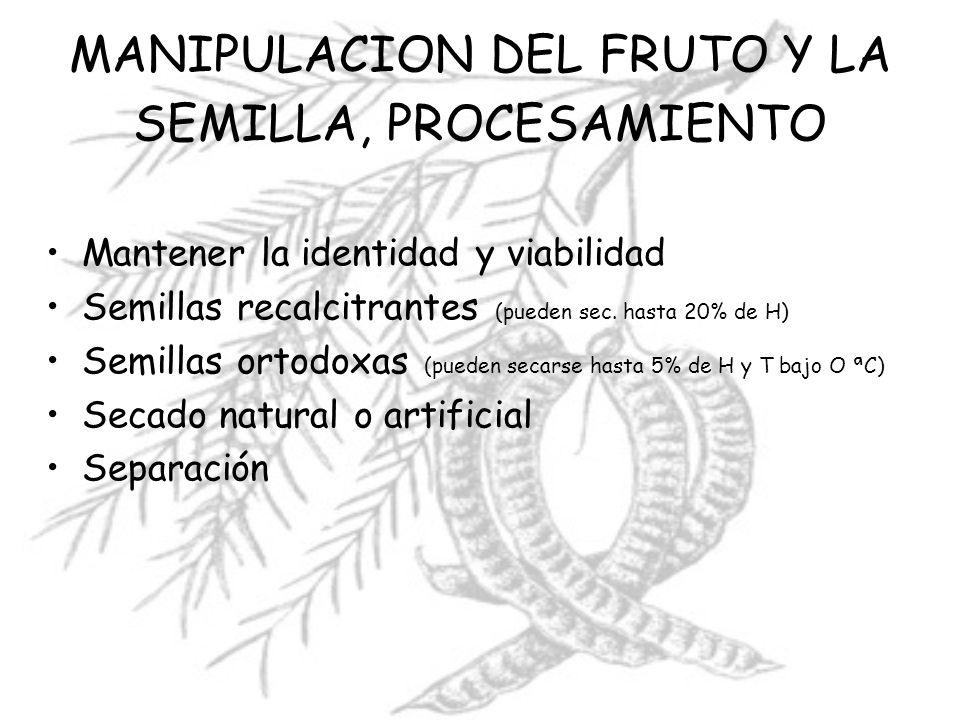 MANIPULACION DEL FRUTO Y LA SEMILLA, PROCESAMIENTO Mantener la identidad y viabilidad Semillas recalcitrantes (pueden sec. hasta 20% de H) Semillas or