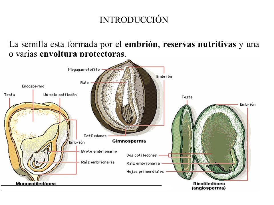 La semilla esta formada por el embrión, reservas nutritivas y una o varias envoltura protectoras. La calidad de la semilla se basa en: su capacidad de