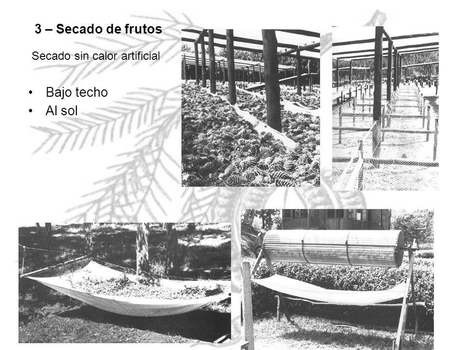 3 – Secado de frutos Bajo techo Al sol Secado sin calor artificial