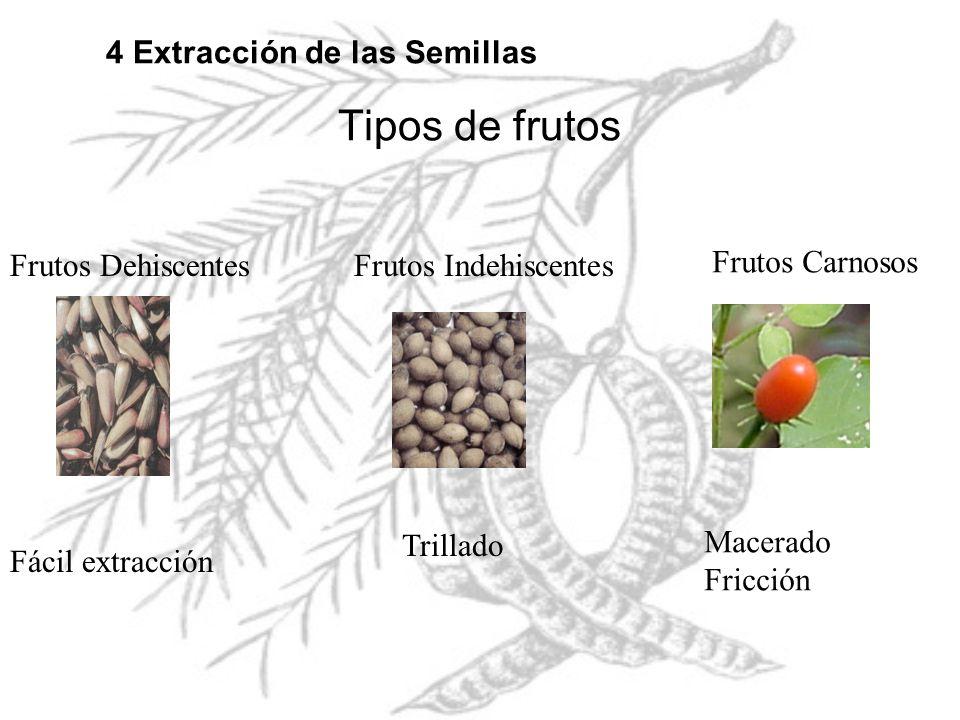Tipos de frutos Frutos DehiscentesFrutos Indehiscentes Frutos Carnosos 4 Extracción de las Semillas Fácil extracción Trillado Macerado Fricción