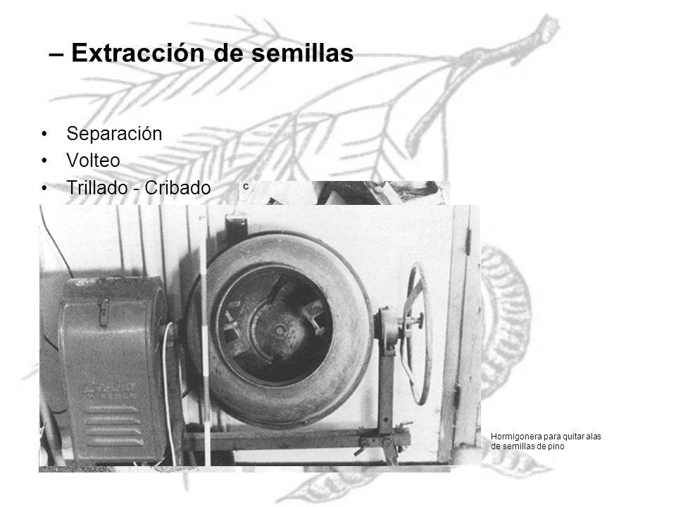 – Extracción de semillas Separación Volteo Trillado - Cribado Hormigonera para quitar alas de semillas de pino