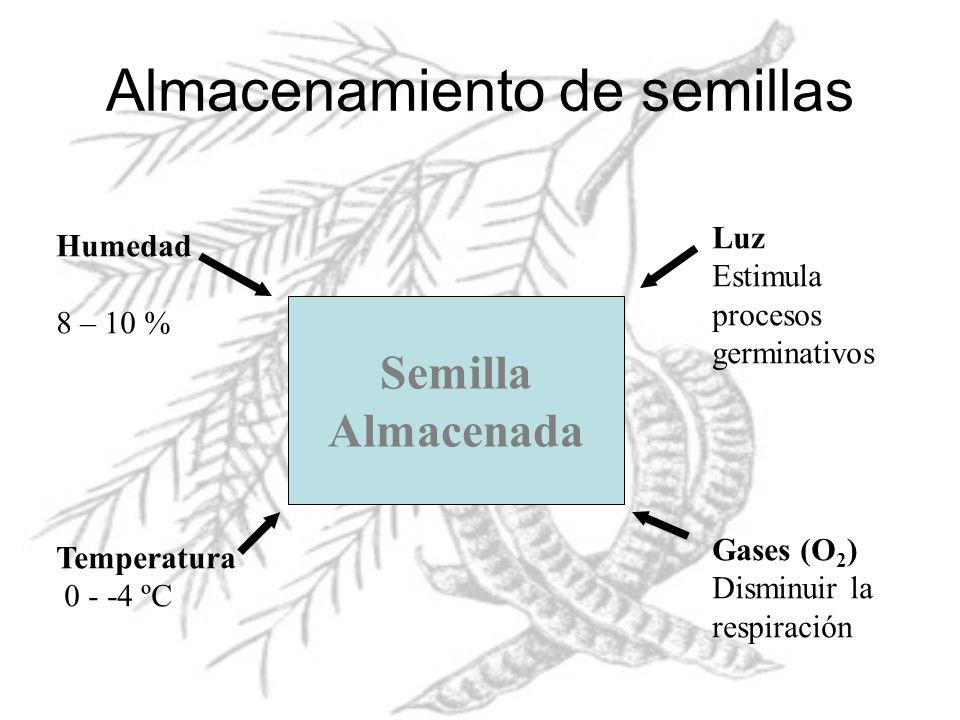 Almacenamiento de semillas Semilla Almacenada Humedad 8 – 10 % Temperatura 0 - -4 ºC Luz Estimula procesos germinativos Gases (O 2 ) Disminuir la resp