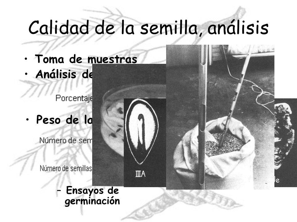 Calidad de la semilla, análisis Toma de muestras Análisis de pureza Peso de la semilla –Ensayos de germinación