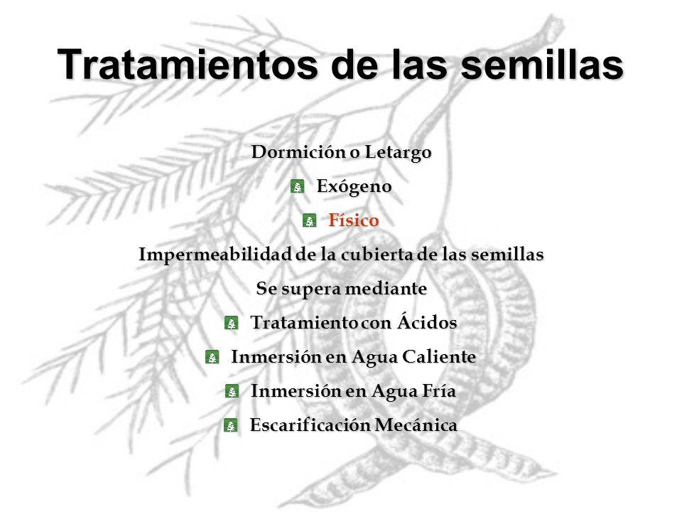 Dormición o Letargo ExógenoFísico Impermeabilidad de la cubierta de las semillas Se supera mediante Tratamiento con Ácidos Inmersión en Agua Caliente