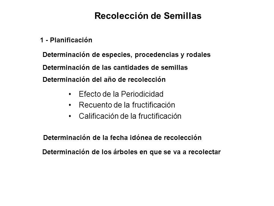 Recolección de Semillas 1 - Planificación Determinación de especies, procedencias y rodales Determinación de las cantidades de semillas Determinación