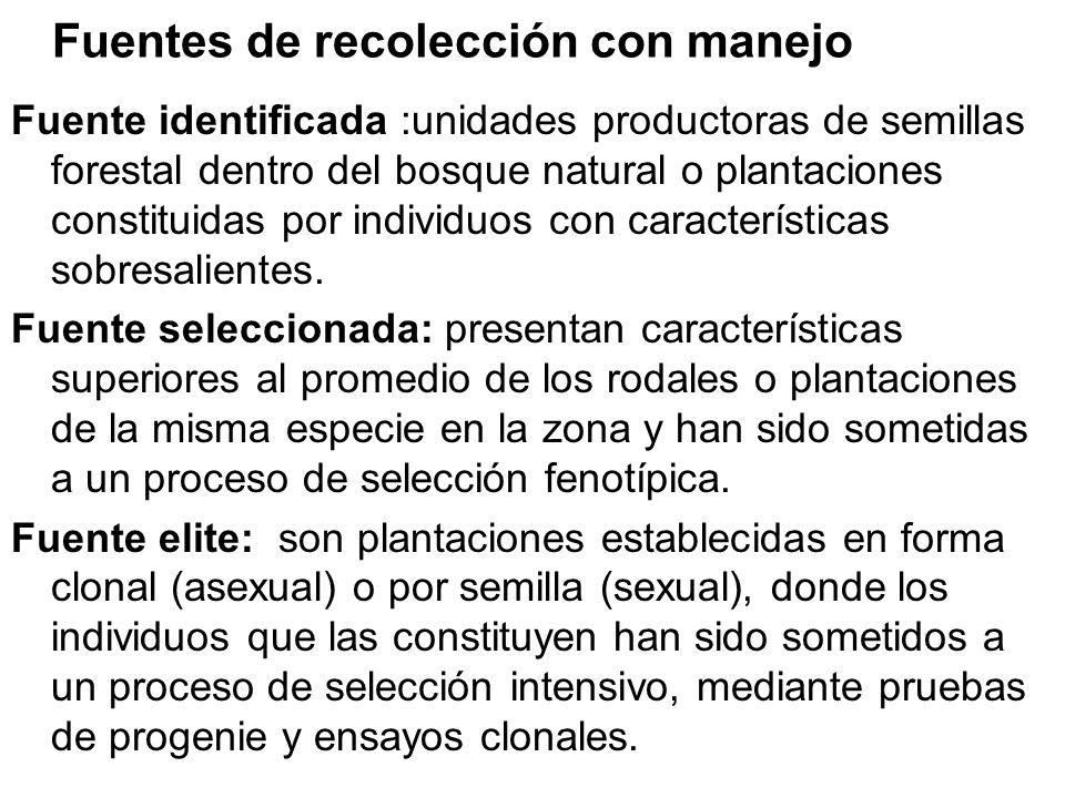 Fuentes de recolección con manejo Fuente identificada :unidades productoras de semillas forestal dentro del bosque natural o plantaciones constituidas