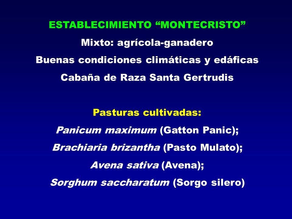ESTABLECIMIENTO MONTECRISTO Mixto: agrícola-ganadero Buenas condiciones climáticas y edáficas Cabaña de Raza Santa Gertrudis Pasturas cultivadas: Pani