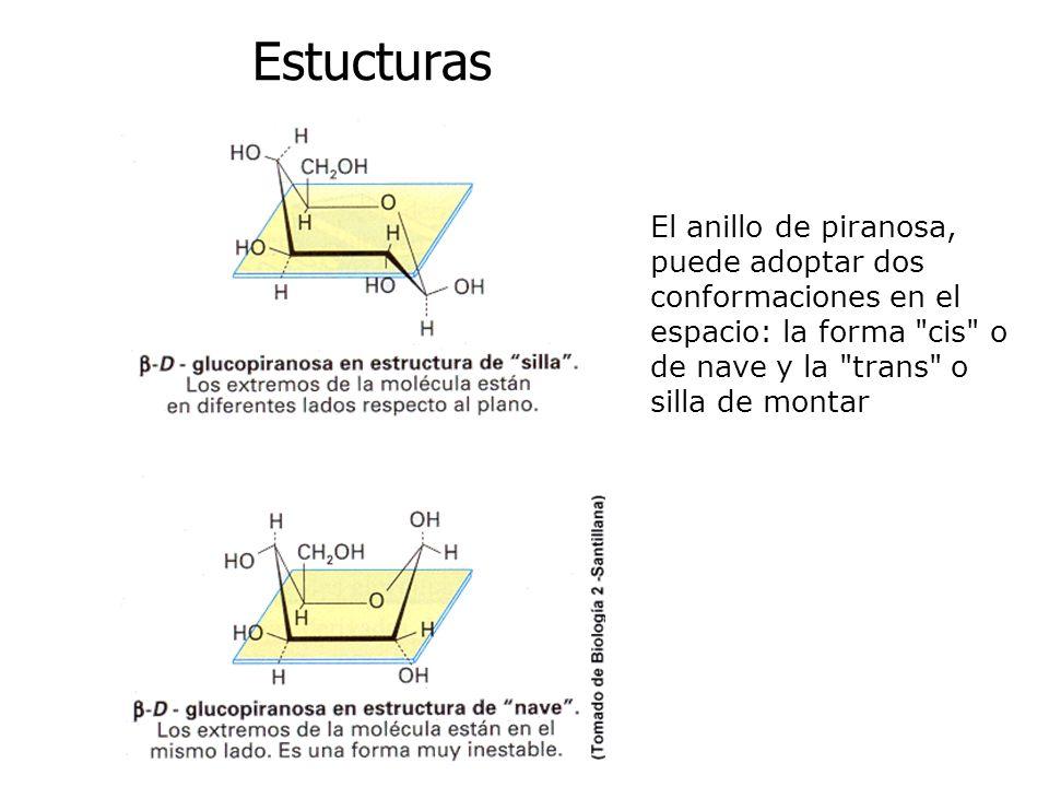 Estucturas El anillo de piranosa, puede adoptar dos conformaciones en el espacio: la forma
