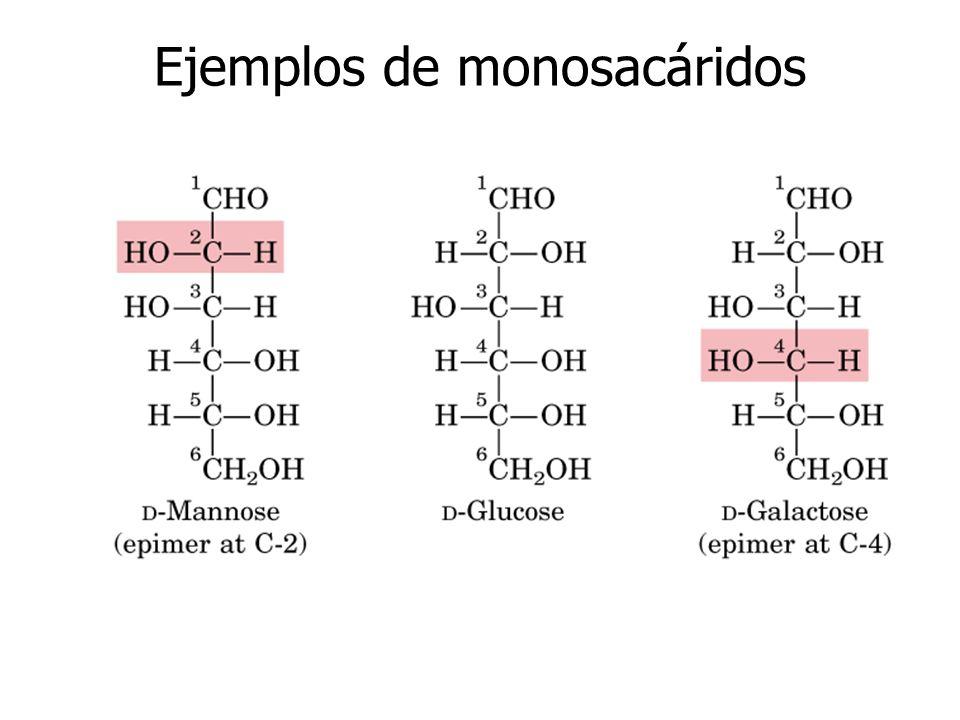 Ejemplos de monosacáridos