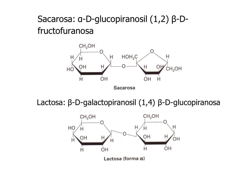 Sacarosa: α-D-glucopiranosil (1,2) β-D- fructofuranosa Lactosa: β-D-galactopiranosil (1,4) β-D-glucopiranosa
