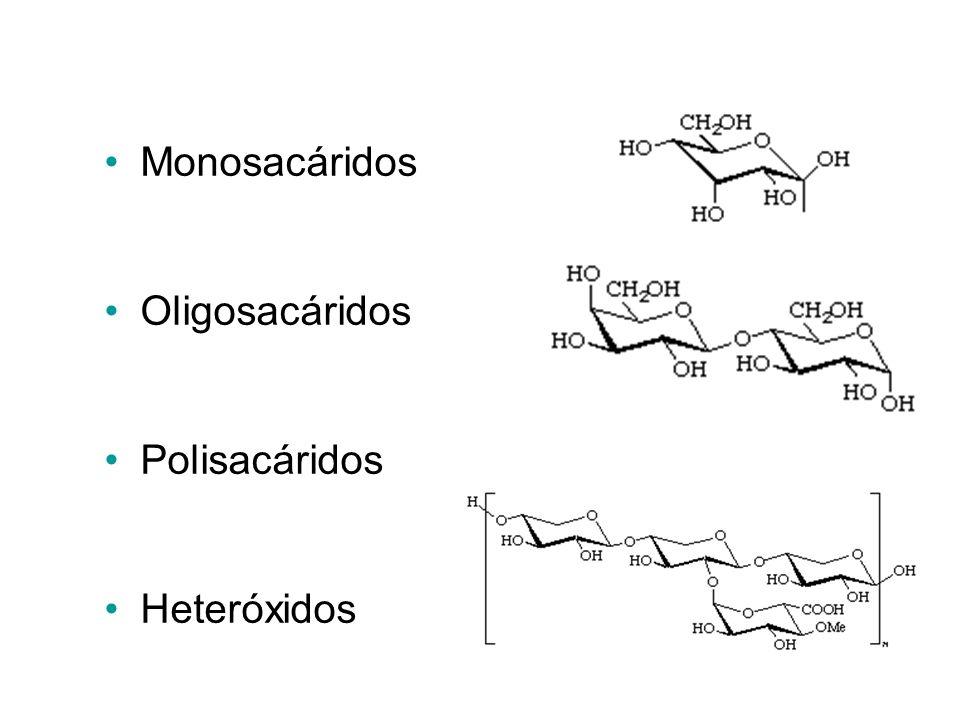 Clasificación Monosacáridos Oligosacáridos Polisacáridos Heteróxidos