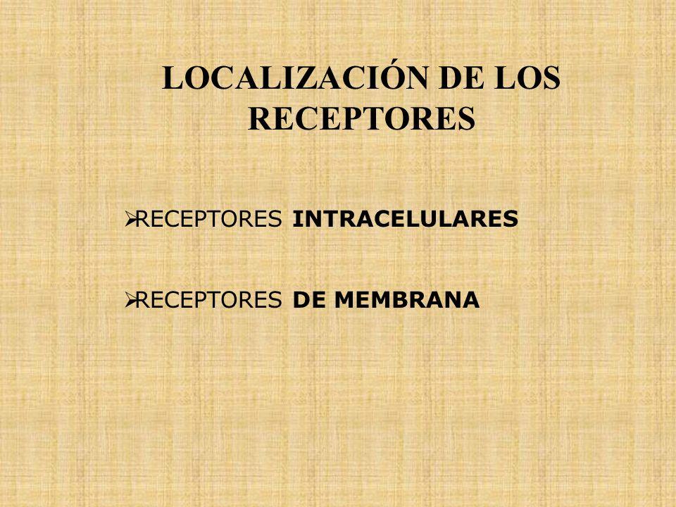RECEPTORES GENERALIDADES NÚMERO DE RECEPTORES REGULACIÓN DE LOS RECEPTORES