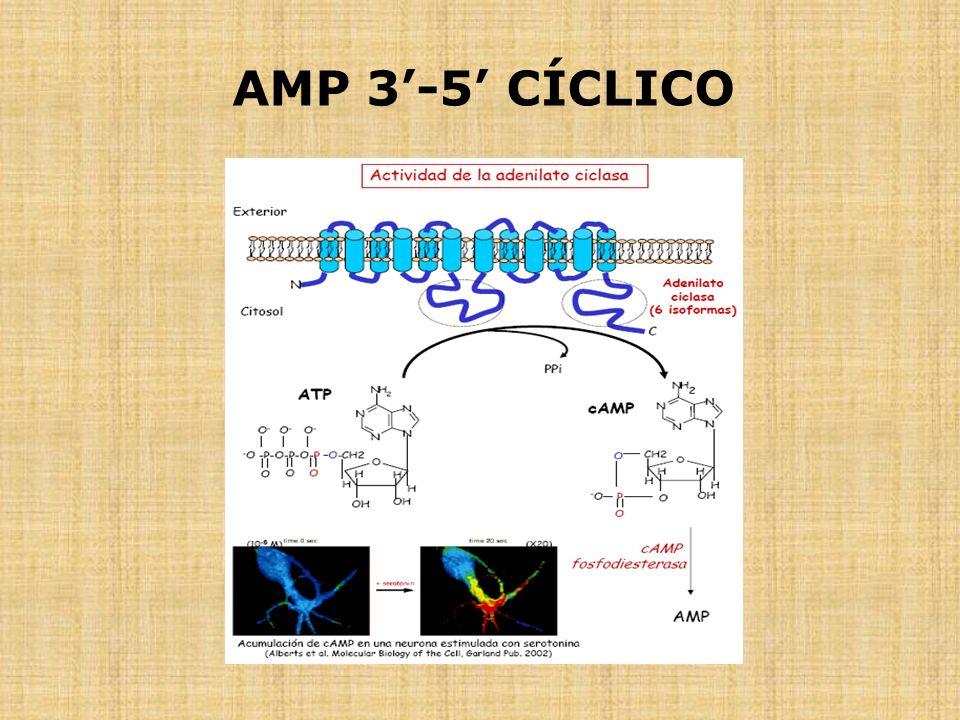 AMP 3-5 CÍCLICO
