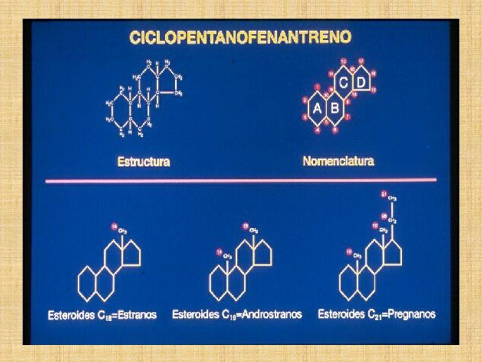 Adrenalina Noradrenalina T4 o Tiroxina T3 Melatonina DERIVADAS DE AA