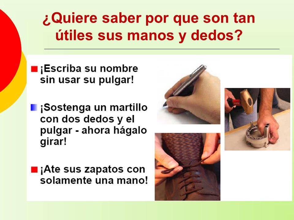 ¿Quiere saber por que son tan útiles sus manos y dedos?
