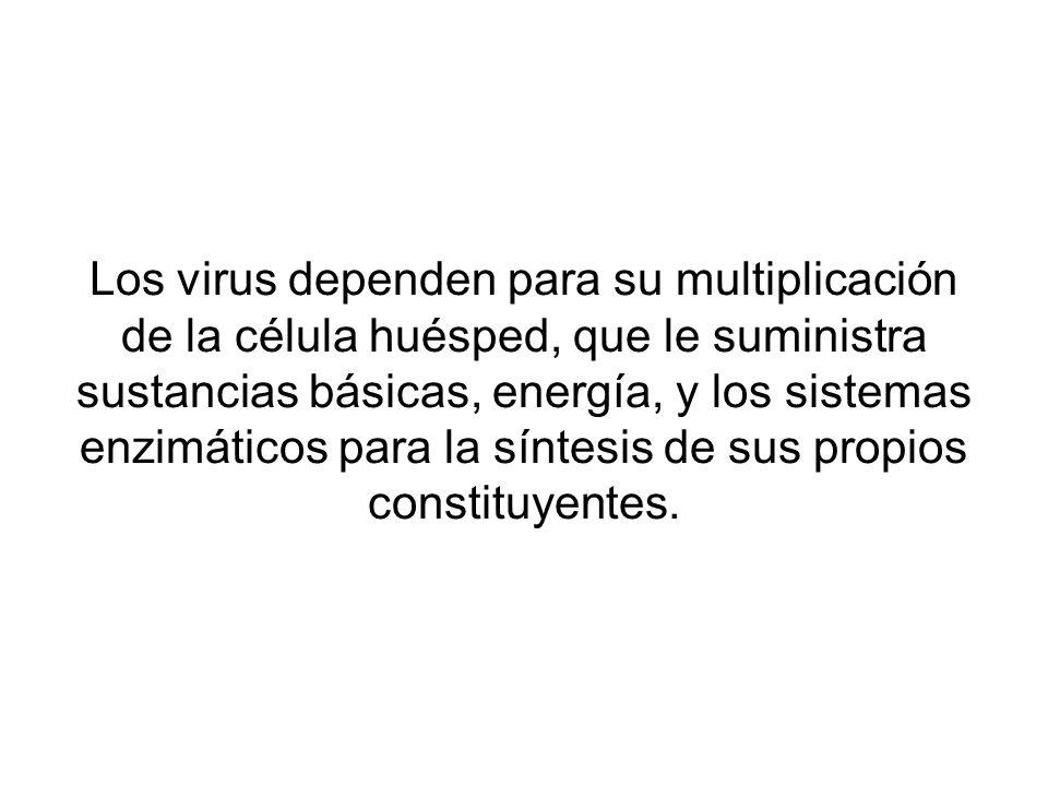Los virus dependen para su multiplicación de la célula huésped, que le suministra sustancias básicas, energía, y los sistemas enzimáticos para la sínt
