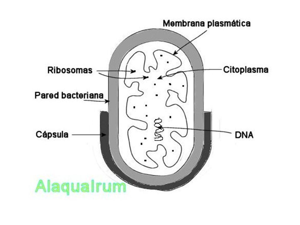 Agente patógeno : cualquier microorganismo que posee la capacidad de producir enfermedad Virulencia : es una expresión cuantitativa del poder patógeno.