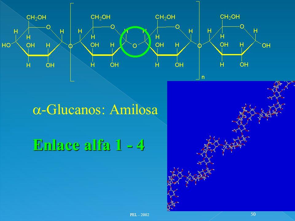 PEL - 2002 50 -Glucanos: Amilosa Enlace alfa 1 - 4
