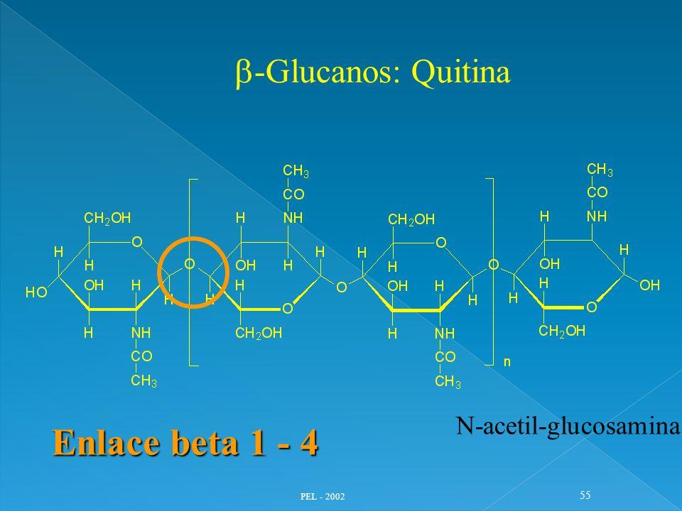 PEL - 2002 55 -Glucanos: Quitina Enlace beta 1 - 4 N-acetil-glucosamina