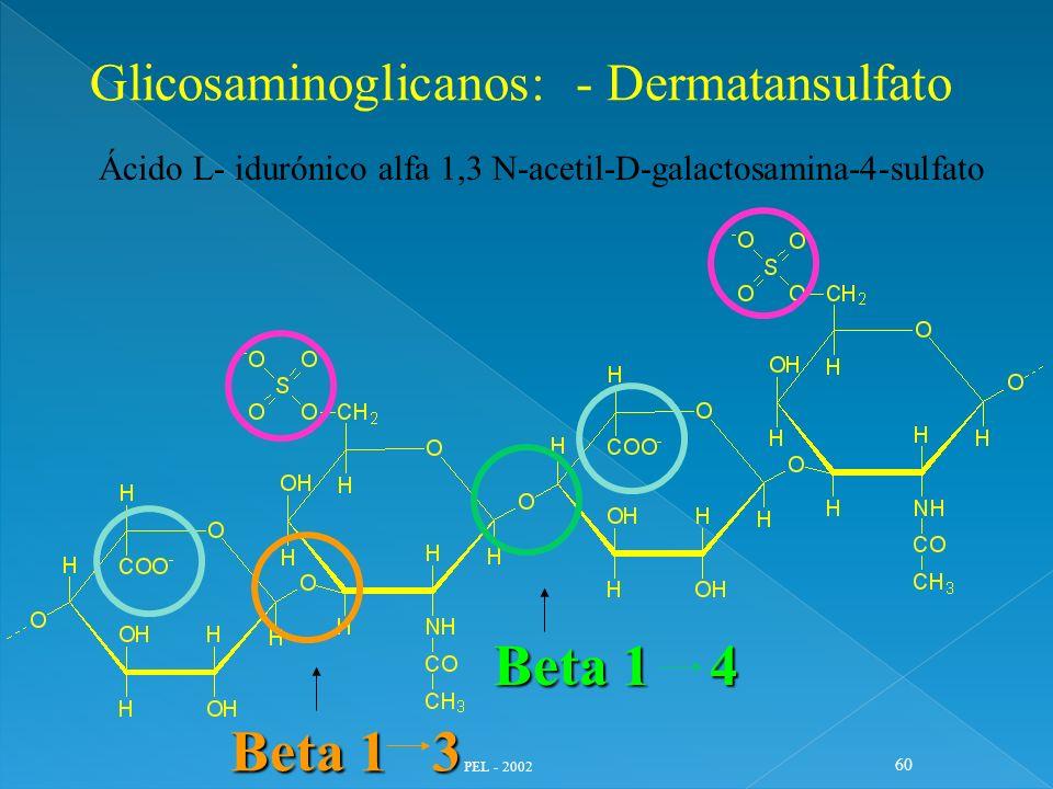 PEL - 2002 60 Glicosaminoglicanos: - Dermatansulfato Ácido L- idurónico alfa 1,3 N-acetil-D-galactosamina-4-sulfato Beta 1 4 Beta 1 3