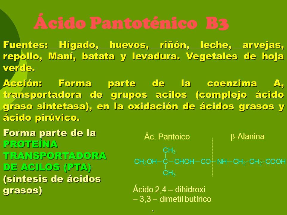 Ácido Pantoténico B3 Fuentes: Hígado, huevos, riñón, leche, arvejas, repollo, Maní, batata y levadura. Vegetales de hoja verde. Acción: Forma parte de