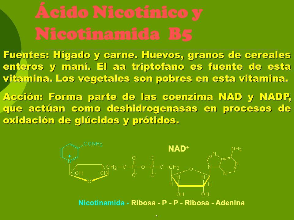 Ácido Nicotínico y Nicotinamida B5 Fuentes: Hígado y carne. Huevos, granos de cereales enteros y maní. El aa triptofano es fuente de esta vitamina. Lo