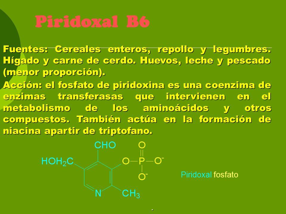 Piridoxal B6 Fuentes: Cereales enteros, repollo y legumbres. Hígado y carne de cerdo. Huevos, leche y pescado (menor proporción). Acción: el fosfato d