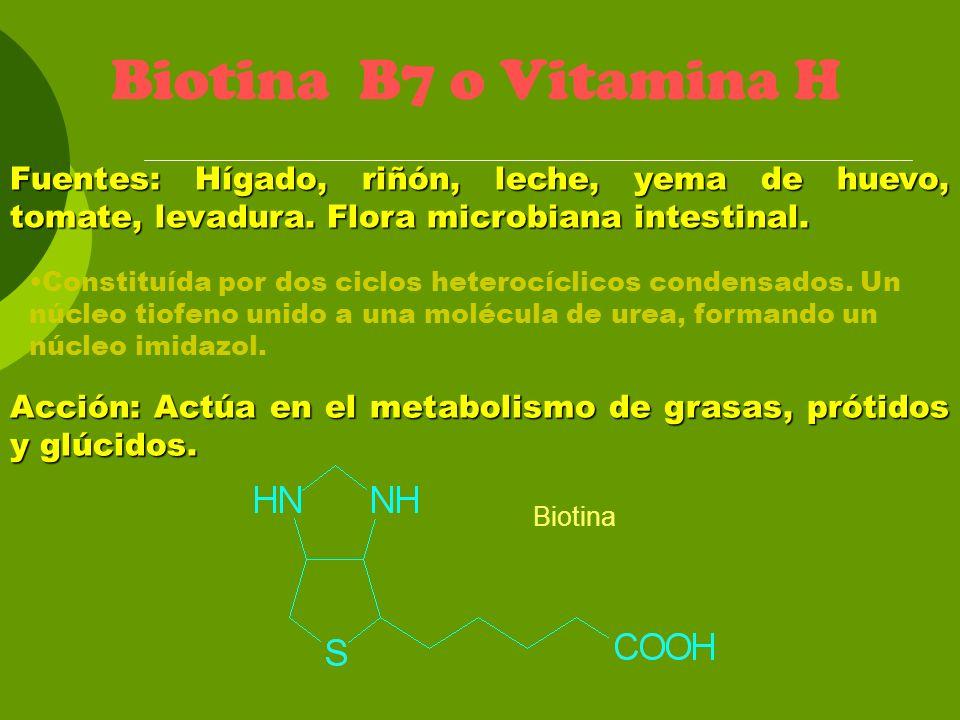 Biotina Biotina B7 o Vitamina H Fuentes: Hígado, riñón, leche, yema de huevo, tomate, levadura. Flora microbiana intestinal. Acción: Actúa en el metab