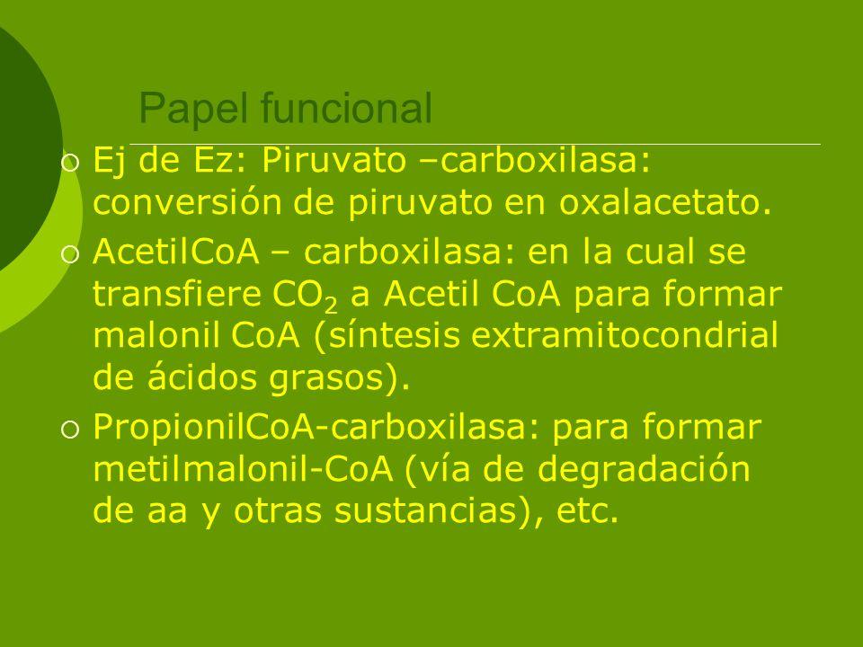Papel funcional Ej de Ez: Piruvato –carboxilasa: conversión de piruvato en oxalacetato. AcetilCoA – carboxilasa: en la cual se transfiere CO 2 a Aceti