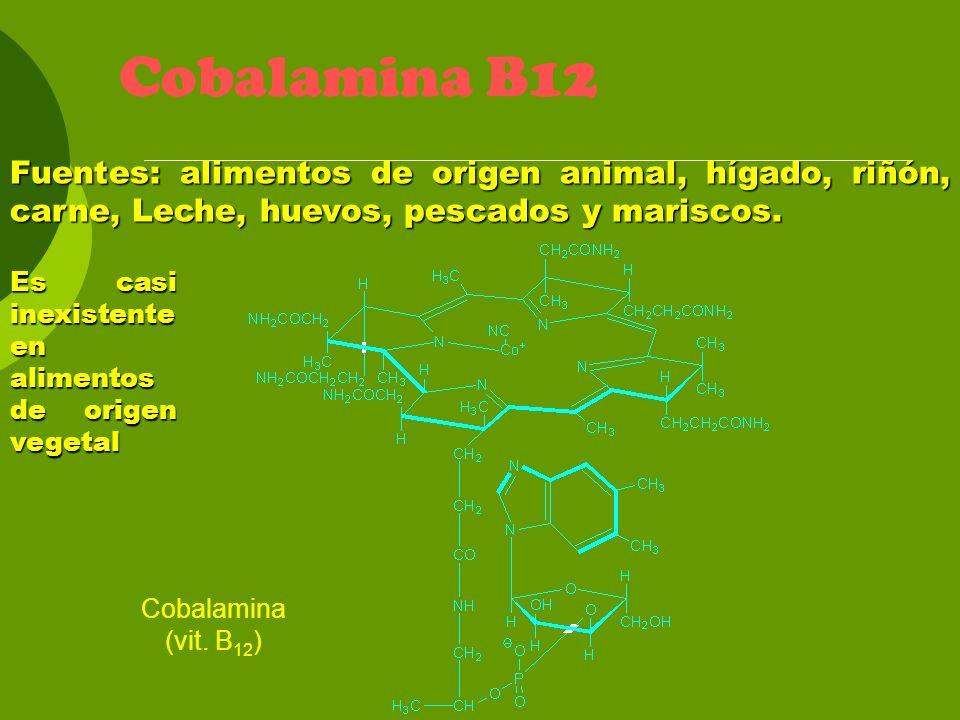 Cobalamina B12 Fuentes: alimentos de origen animal, hígado, riñón, carne, Leche, huevos, pescados y mariscos. Es casi inexistente en alimentos de orig